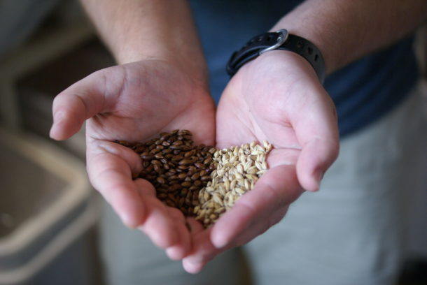 Two types of grains that can be purchased from Upstate Craft Beer Co. for home brewers.